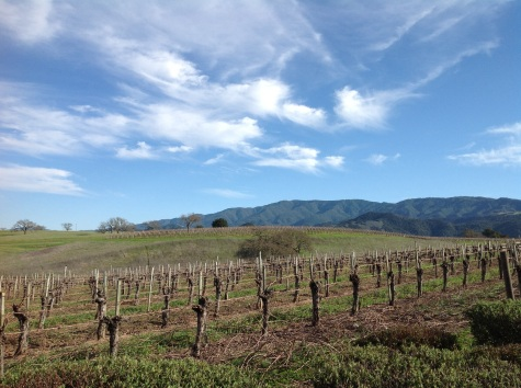 Gainey Vineyard, Santa Ynez